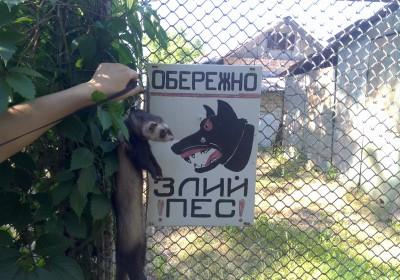 Осторожно злая собака,тьфу хорь